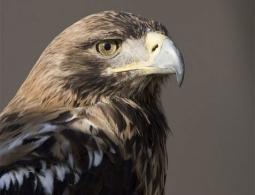 Banco de reserva genética para aves amenazadas